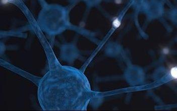 neuroplasticity - birth into being